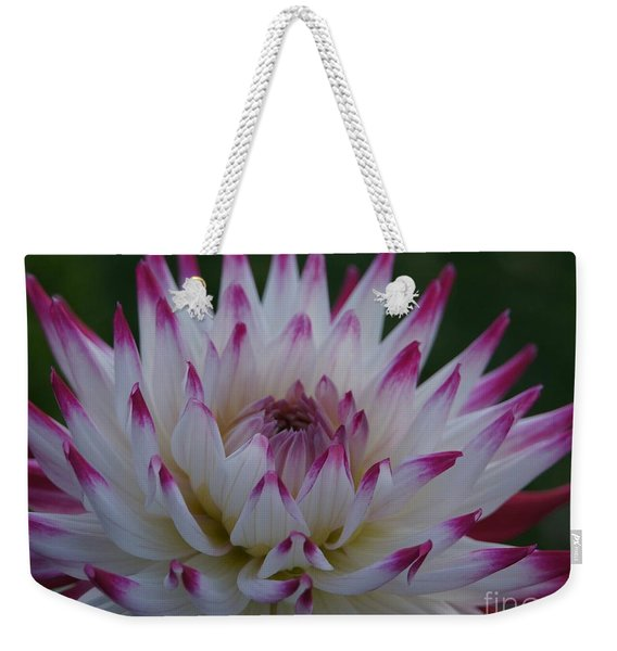 Weekender Tote Bag featuring the photograph Purple Tipped Starburst Dahlia by Patricia Strand