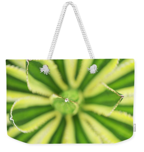 Weekender Tote Bag featuring the photograph Quadricolor Agave Plant by Charmian Vistaunet