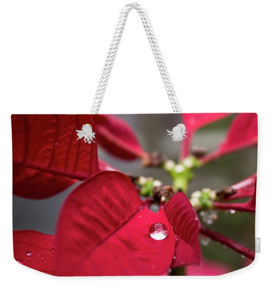Rain Drop On A Poinsettia  Weekender Tote Bag