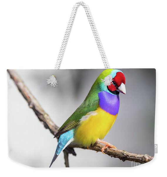 Weekender Tote Bag featuring the photograph Rainbow Finch by Robin Zygelman