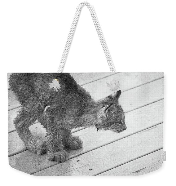 Weekender Tote Bag featuring the photograph Crouching Kitty by Tim Newton