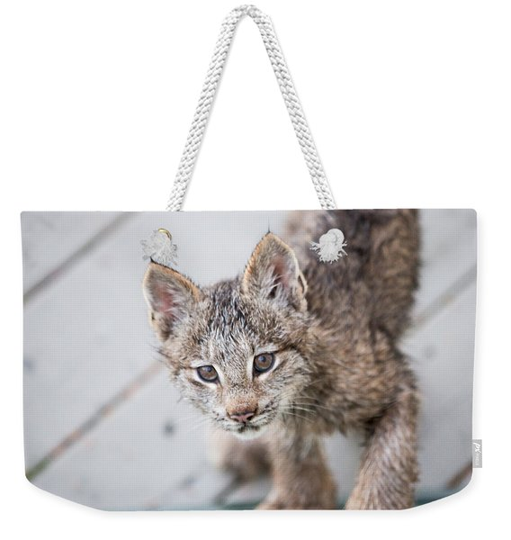 Weekender Tote Bag featuring the photograph Does Click Mean Edible by Tim Newton