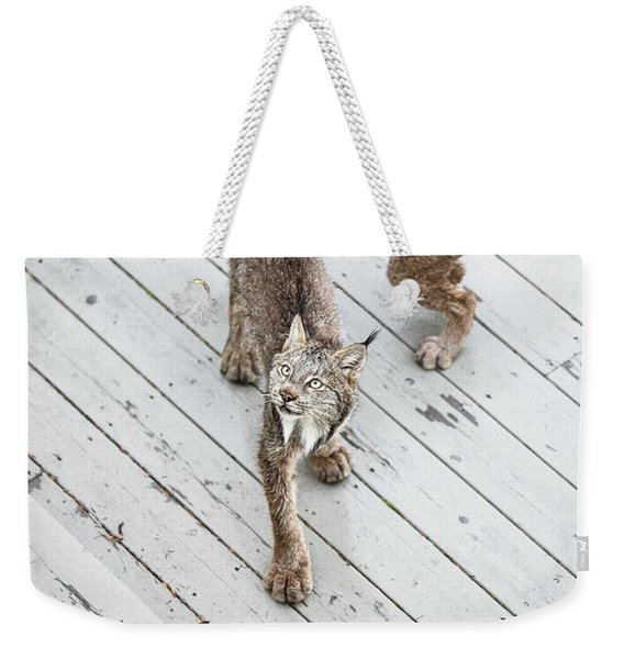 Weekender Tote Bag featuring the photograph Always Scanning by Tim Newton
