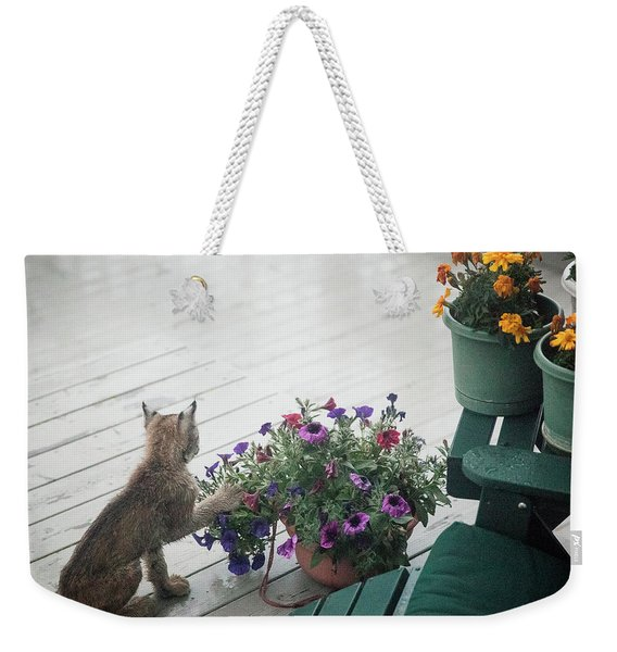 Weekender Tote Bag featuring the photograph Swat The Petunias by Tim Newton