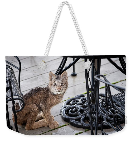 Weekender Tote Bag featuring the photograph Are You Looking At Me by Tim Newton