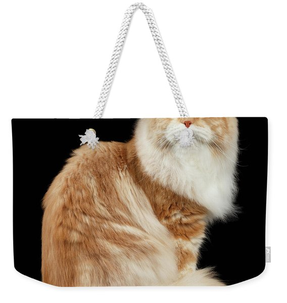 Red Big Adult Persian Cat Angry Sits And Turned Back On Black  Weekender Tote Bag