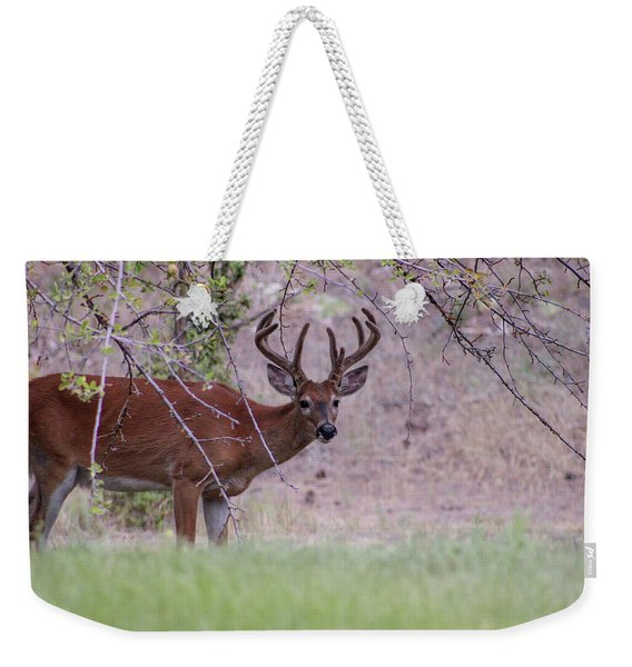 Weekender Tote Bag featuring the photograph Red Bucks 2 by Antonio Romero