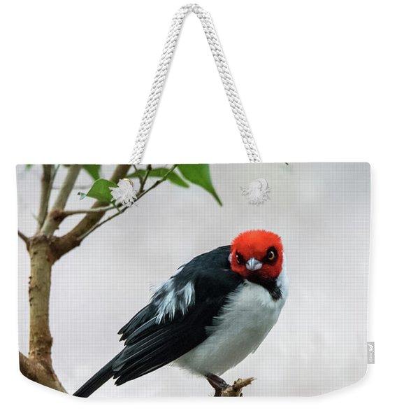 Red Capped Cardinal Weekender Tote Bag