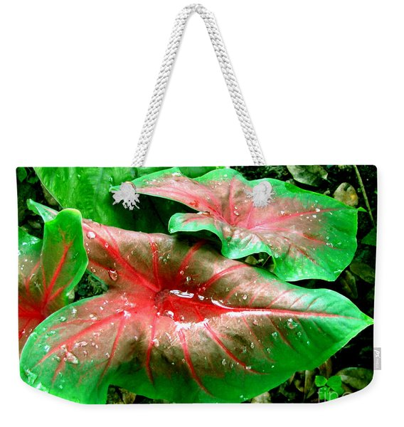 Weekender Tote Bag featuring the painting Red Green Caladium Floral Still Life Morning Rain by Mas Art Studio