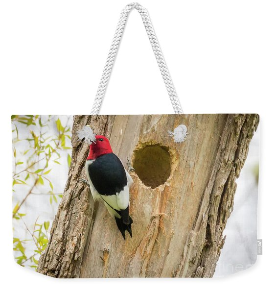 Red-headed Woodpecker At Home Weekender Tote Bag