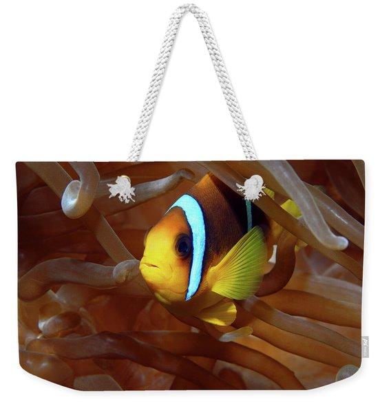 Red Sea Clownfish, Eilat, Israel 8 Weekender Tote Bag