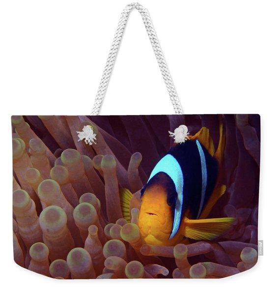 Red Sea Clownfish, Eilat, Israel 9 Weekender Tote Bag