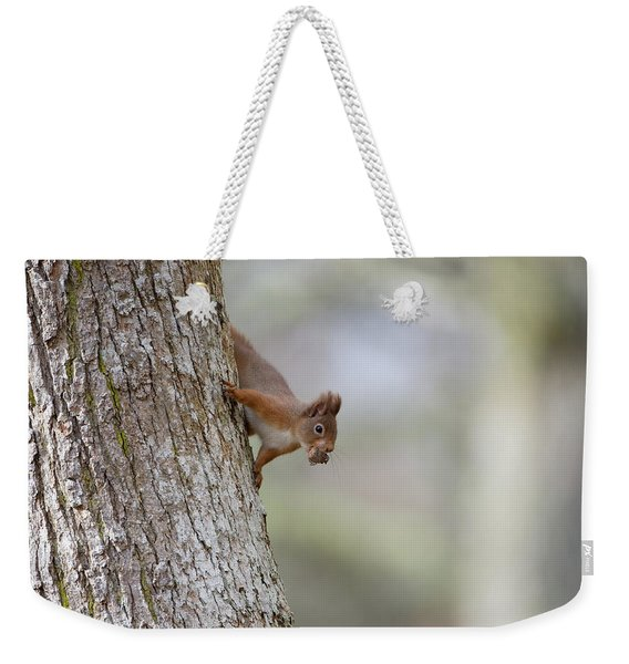 Red Squirrel Climbing Down A Tree Weekender Tote Bag