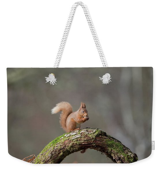 Red Squirrel Eating A Hazelnut Weekender Tote Bag