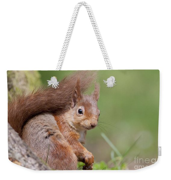 Red Squirrel - Scottish Highlands  #17 Weekender Tote Bag