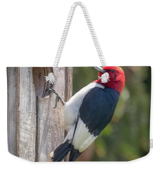 Red-headed Woodpecker 2018  Weekender Tote Bag