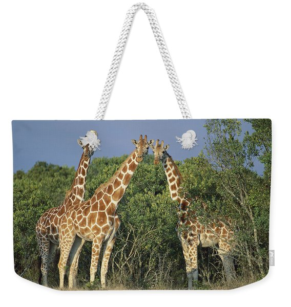 Reticulated Giraffe Trio Weekender Tote Bag