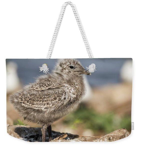Ring-billed Gull Chick 2016-1 Weekender Tote Bag