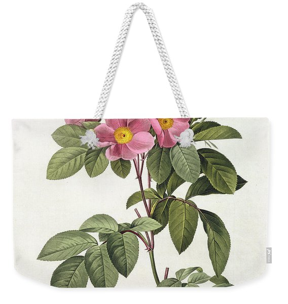 Rosa Carolina Corymbosa Weekender Tote Bag