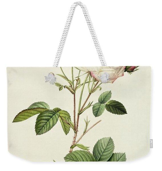 Rosa Centifolia Mutabilis Weekender Tote Bag