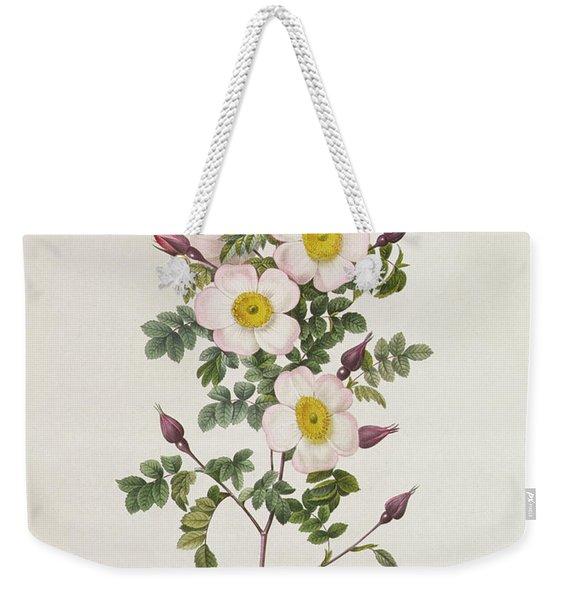 Rosa Pimpinelli Folia Inermis Weekender Tote Bag