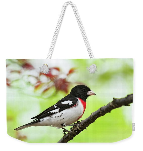 Rose-breasted Grosbeak Spring 2018-1 Weekender Tote Bag
