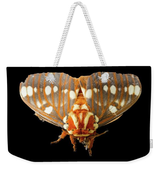 Royal Walnut Moth On Black Weekender Tote Bag