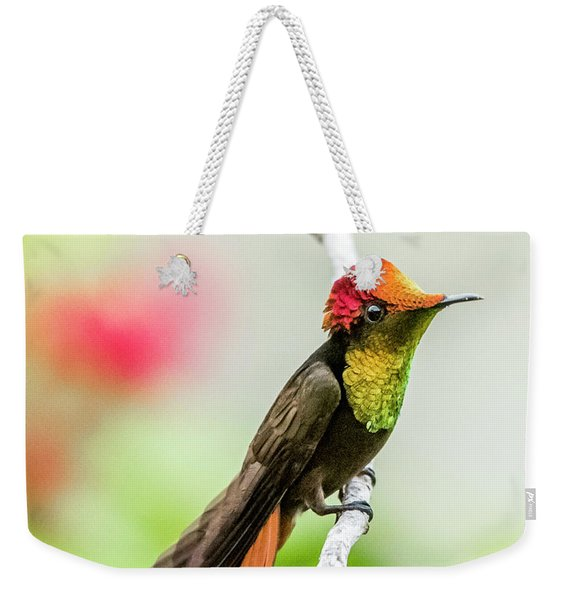 Weekender Tote Bag featuring the photograph Ruby's Headdress by Rachel Lee Young