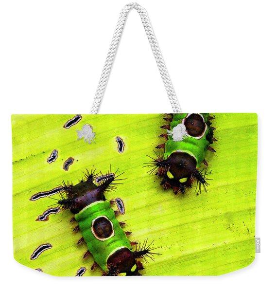 Saddleback Caterpillars Of Costa Rica Weekender Tote Bag