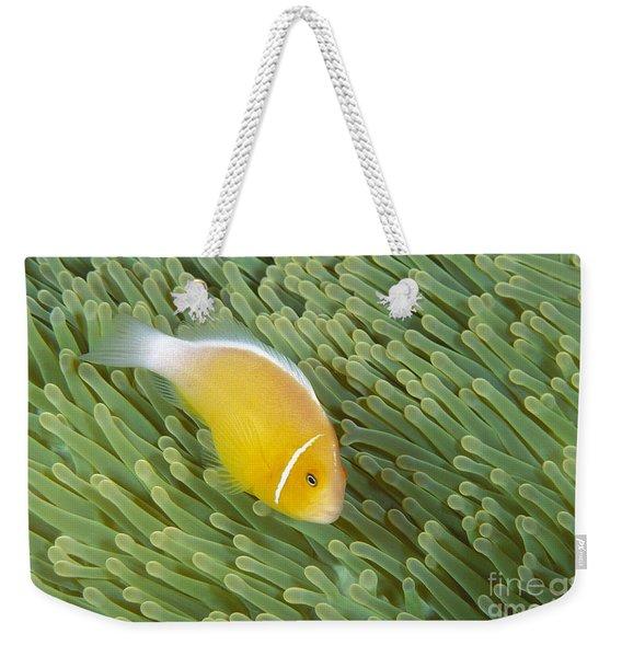 Saipan, Marine Life Weekender Tote Bag