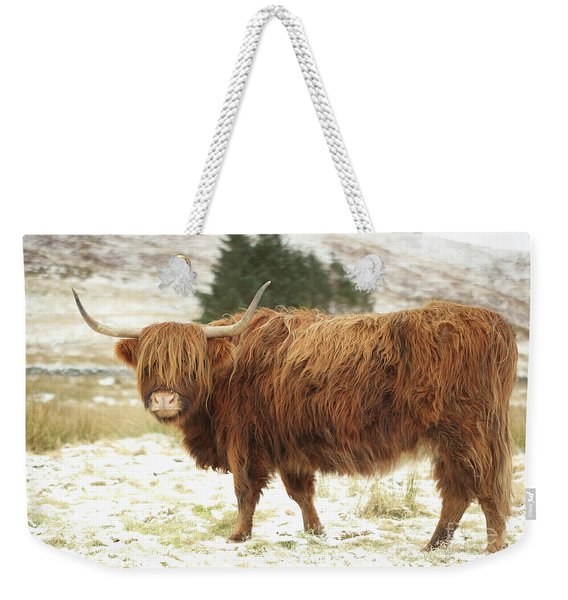 Scottish Red Highland Cow In Winter Weekender Tote Bag