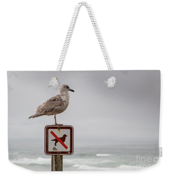 Seagull Standing On Sign And Looking At The Ocean Weekender Tote Bag