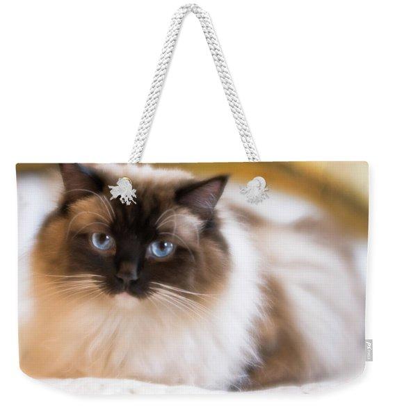 Seal Point Bicolor Ragdoll Cat Weekender Tote Bag