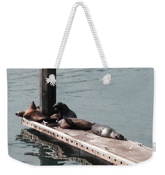 Weekender Tote Bag featuring the photograph Seals At Oceanside by Laurie Lundquist
