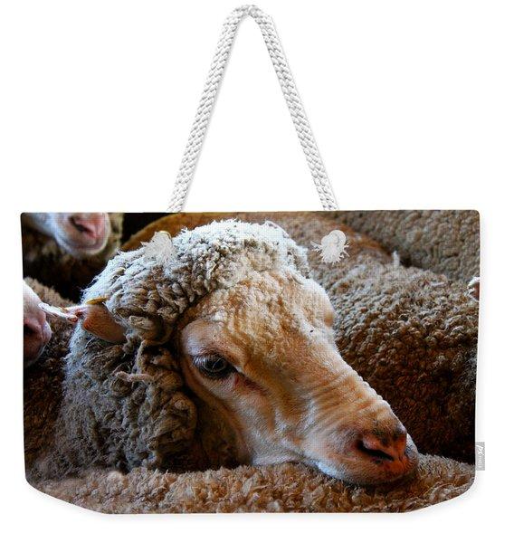 Sheep To Be Sheared Weekender Tote Bag