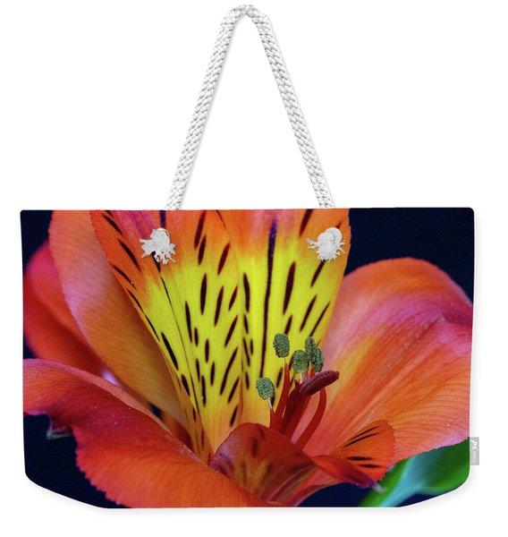 Single Alstroemeria Inca Flower-1 Weekender Tote Bag