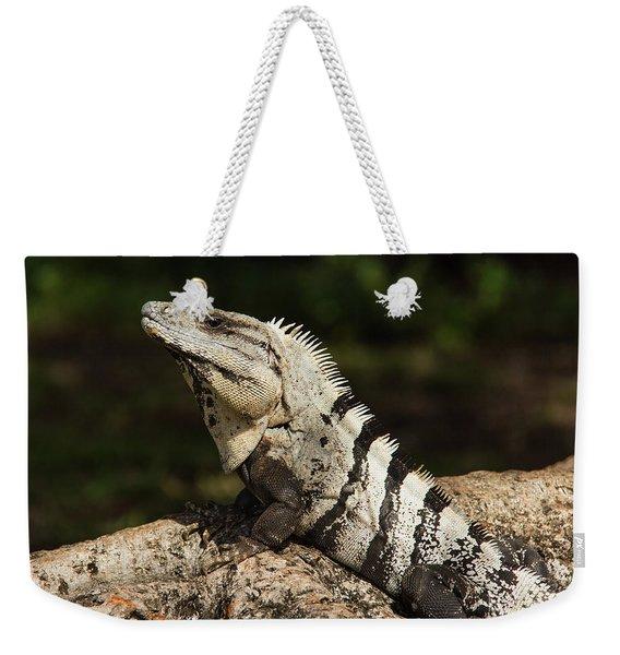 Sir Iguana Mexican Art By Kaylyn Franks Weekender Tote Bag