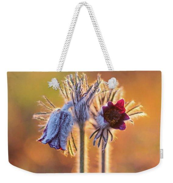 Small Pasque Flower, Pulsatilla Pratensis Nigricans Weekender Tote Bag