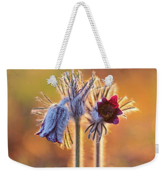 Small Pasque Flower, Pulsatilla Pratensis Nigricans Weekender Tote Bag