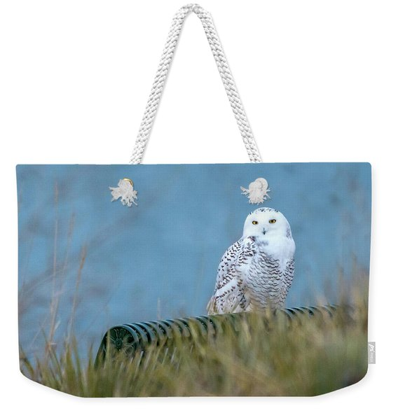 Snowy Owl On A Park Bench Weekender Tote Bag