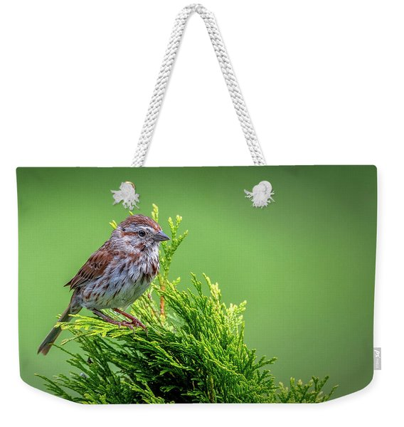 Song Sparrow Perched - Melospiza Melodia Weekender Tote Bag