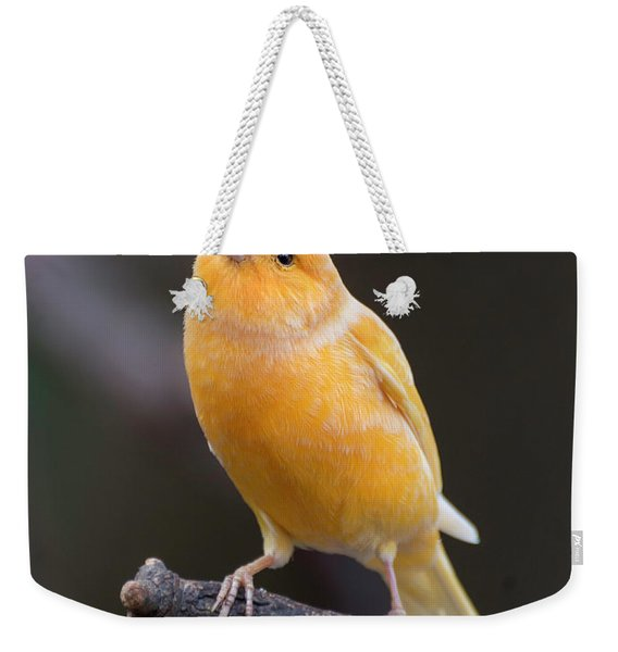 Spanish Timbrado Canary Weekender Tote Bag