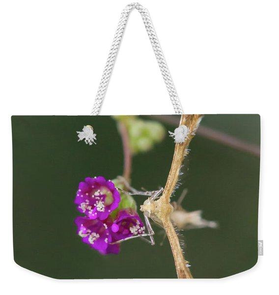 Spiderling Plume Moth On Wineflower Weekender Tote Bag