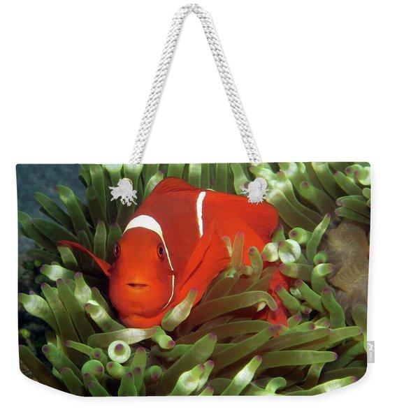 Spinecheek Anemonefish, Indonesia 2 Weekender Tote Bag