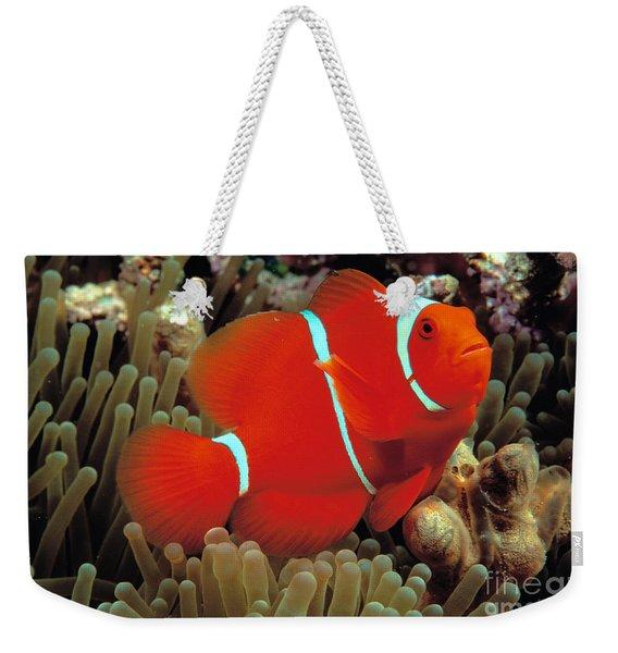 Spinecheek Clownfish Weekender Tote Bag