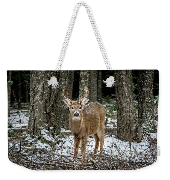 Weekender Tote Bag featuring the photograph Staring Buck by Lester Plank