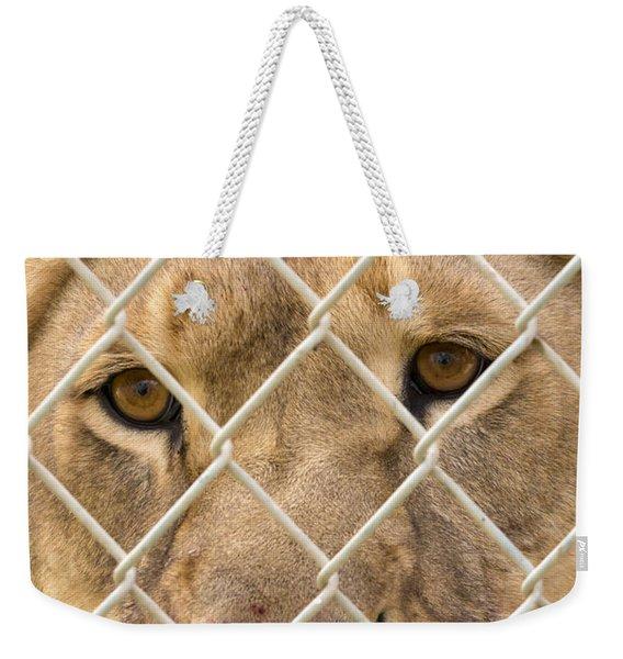 Staring Lioness Weekender Tote Bag