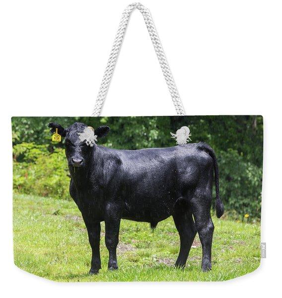 Staring Steer Weekender Tote Bag