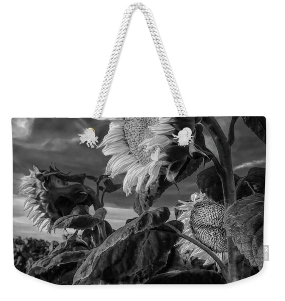 Strength Of A Sunflower Weekender Tote Bag