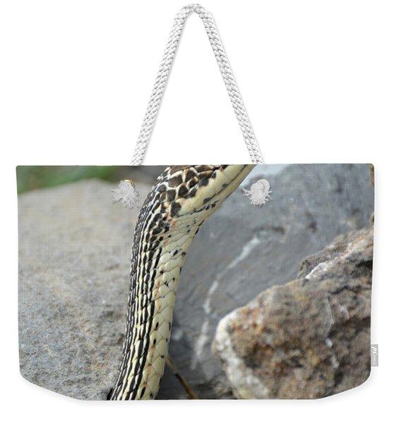 Striped Whipsnake, Masticophis Taeniatus Weekender Tote Bag
